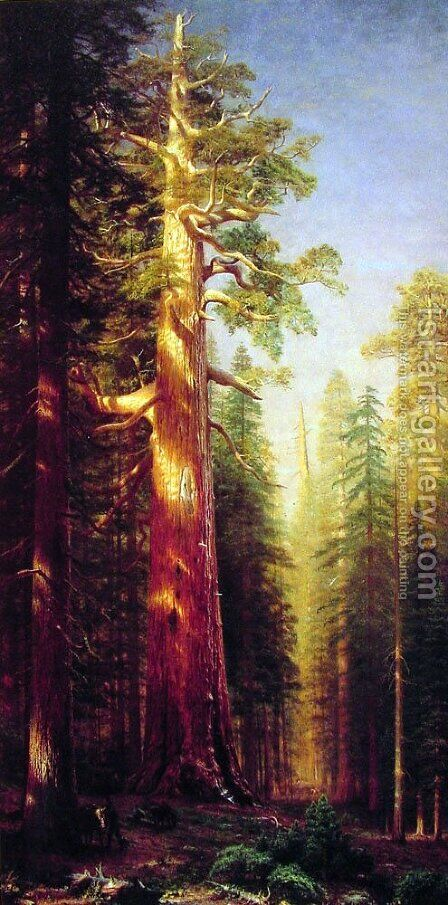 The Great Trees  Mariposa Grove  California by Albert Bierstadt - Reproduction Oil Painting