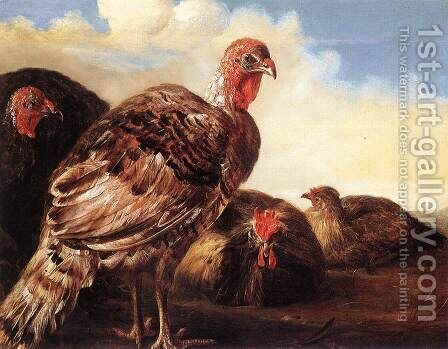 Domestic Fowl by Aelbert Cuyp - Reproduction Oil Painting