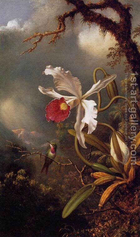 An Amethyst Hummingbird With A White Orchid by Martin Johnson Heade - Reproduction Oil Painting