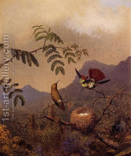 Frilled Coquette by Martin Johnson Heade - Reproduction Oil Painting
