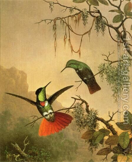 Two Hooded Visorbearer Hummingbirds by Martin Johnson Heade - Reproduction Oil Painting