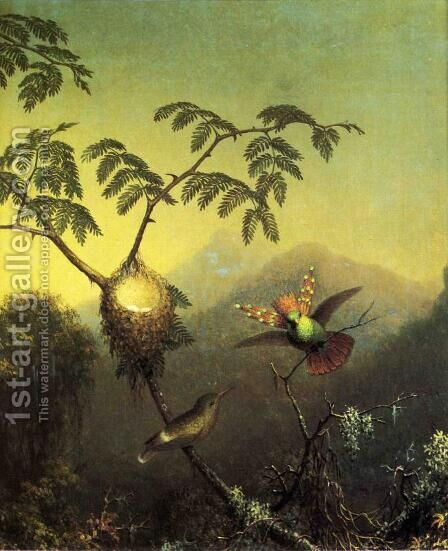 Two Hummingbirds Tufted Coquettes by Martin Johnson Heade - Reproduction Oil Painting